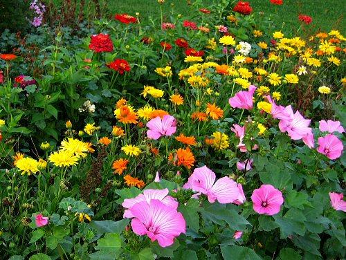 วิธีการปลูกดอกไม้ให้สวยงาม