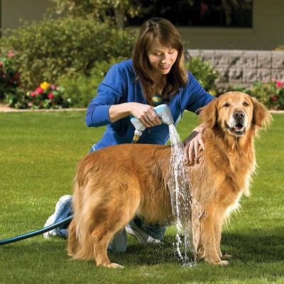 วิธีและข้อปฏิบัติในการอาบน้ำให้สุนัข (หมา)