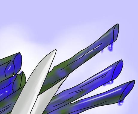 กุหลาบสีน้ำเงิน